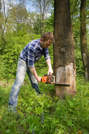 Young worker cutting old dead tree