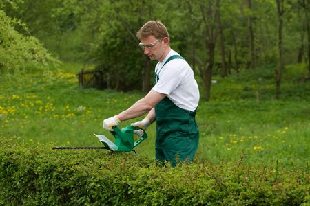 Gardener is trimming the hedge. Stock Photo - 4815006