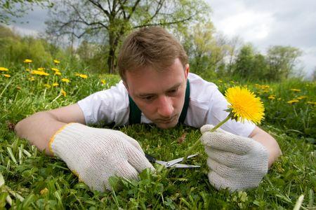 Junge Gärtner schneidet eine einzige Blume, Standard-Bild - 4815011