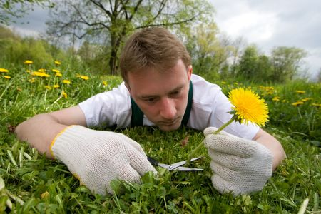 Young gardener is cutting a single flower