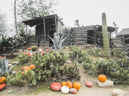 Decorated composed of old western cabins next to pumpkins, cacti and skeletons