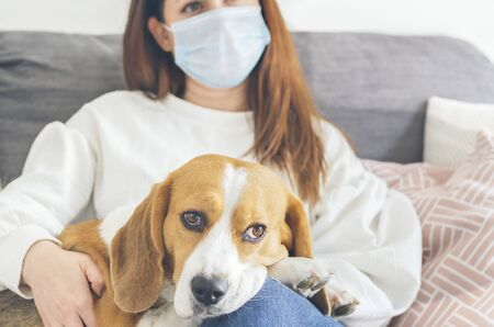 Young woman with brown hair, sitting on her sofa with a medical mask as a precaution against the spread of virus, along with her dog of breed Beagle, coronavirus, COVID-19, selective focus
