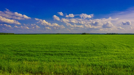 Green field on a Sunny day Imagens