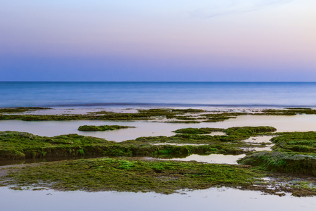 seaweeds: Sunset at Punta Secca Beach with rocks and green seaweeds in Santa Croce Camerina, Sicily, Italy Stock Photo