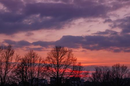 reddish: Reddish sunset with tree silhouette Stock Photo