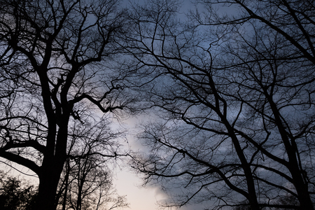 eerie: Eerie Trees with spooky and ominous atmosphere