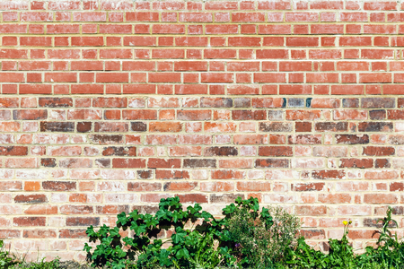 paredes de ladrillos: Red brick wall and green plant for background use