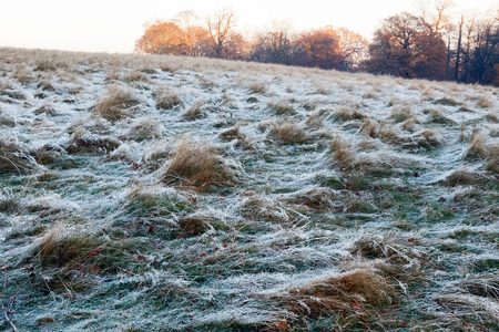 Frosty landscape in Richmond Park, London