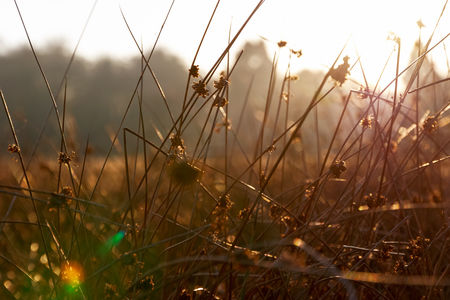 Thick stems of grass in golden sunlight in Richmond Park, London Stock Photo
