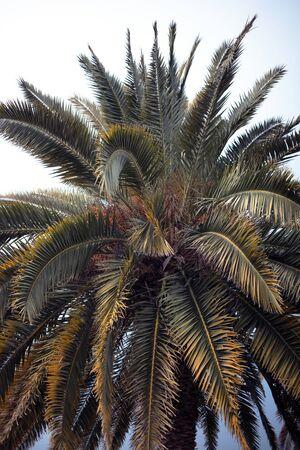 palmier sur fond