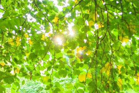sunlight through leaves background