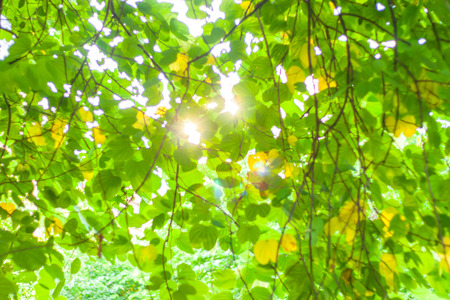 sunlight through leaves background