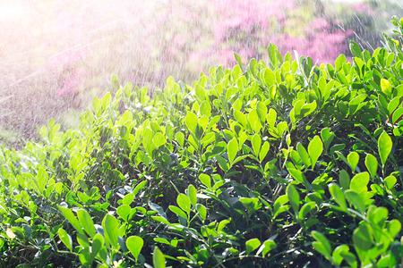 dampen: pouring the bush Stock Photo