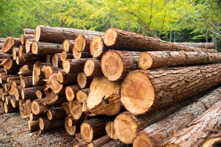 primary product: pile of logs Stock Photo