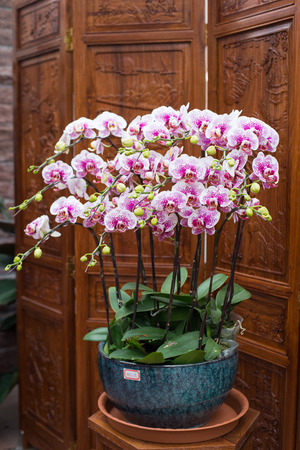 orchid house: potted orchid flower