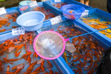 golden fish: golden fish net Stock Photo