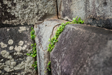 rift: little plant growing on the rift of the stones Stock Photo