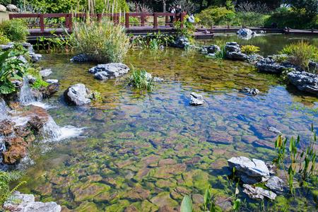 rock bottom: small garden