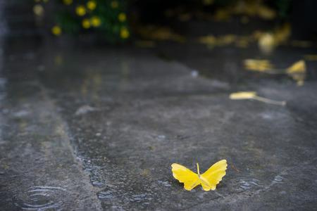 silhouette papillon: forme de papillon ginkgo jaune feuille