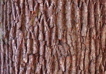 tree bark close up background. photo