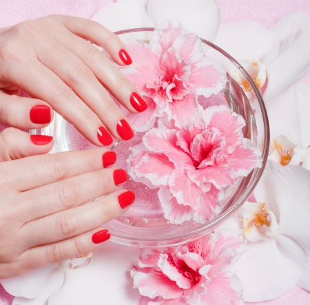 close-up of female hands with red nail polish on the background flowers Stock Photo - 14897380