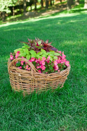 beautiful basket of flowers in the garden landscape photo