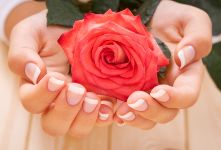 French manicure and red rose Stock Photo - 15548044