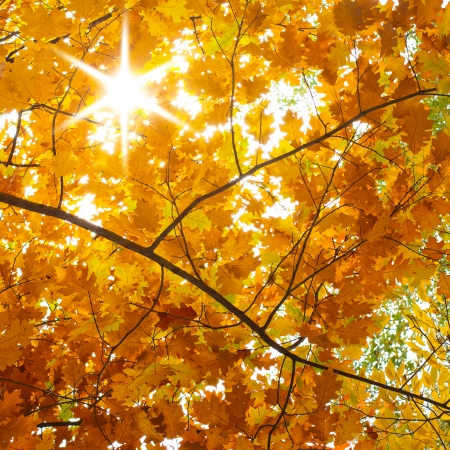 Autumn landscape, sunny  Trees in the park photo