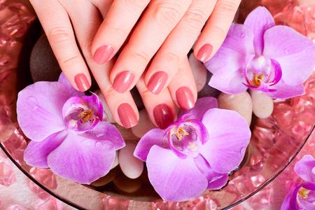 manicure and pedicure. body care, spa treatments photo