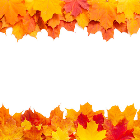 Autumn leaves isolated. Beautiful orange and red leaves on white background taken in studio. photo