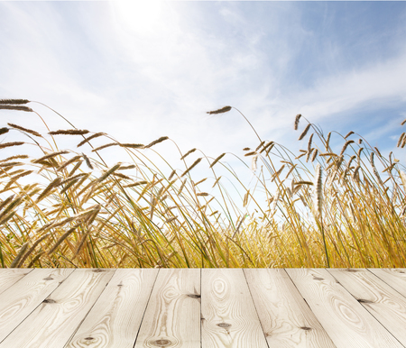 wood board table in front of field of wheat on summer background. Ready for product display montages Stock Photo