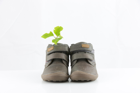 Shoes with green plant Stock Photo