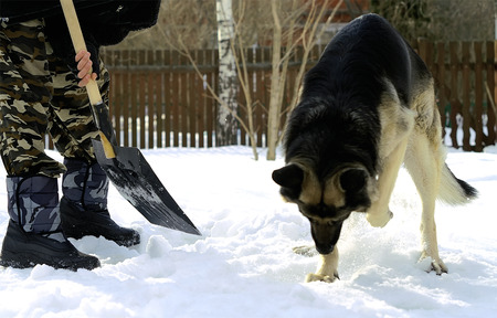 man and his dog removing snow, humor, concept of team work photo