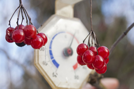 depth measurement: Image of red fresh berries on branch and blurred retro thermometer in background Stock Photo