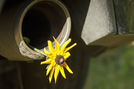 carbondioxide: Flower in an exhaust-pipe of a modern car, concept of environment and ecology Stock Photo
