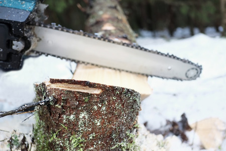 outdoor shot: Chain saw at work in the wither forest , outdoor shot with particular focus on the stump