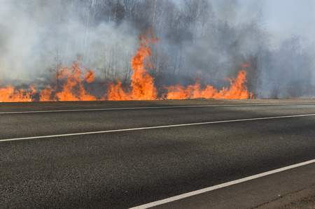 near death: Forest fire and empty road closed, outdoor shot, concept of natural disaster or war