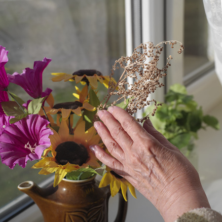 sill: Female hand arranging the flowers on a window sill, full of morning light square shot