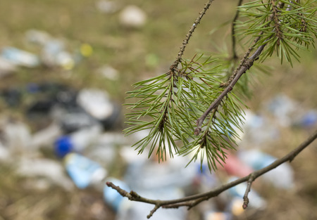pine tree needles: Pine tree needles in focus and rubbish in the blurred background, concept of ecological disaster