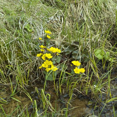 yellow wildflowers: Abundance of yellow wildflowers along swamp, concept of season change