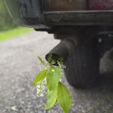car exhaust: Closeup of a car exhaust pipe with twig of birdcherry tree in it concept of nature damage