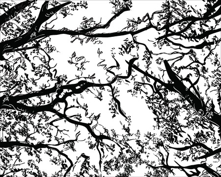 interlacing: Illustration of interlacing chaotic branches, drawn in black and white