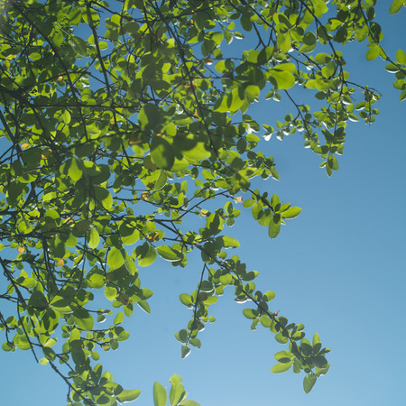 angled: Angled shot of green foliage against the blue, sunny sky, focus in foreground