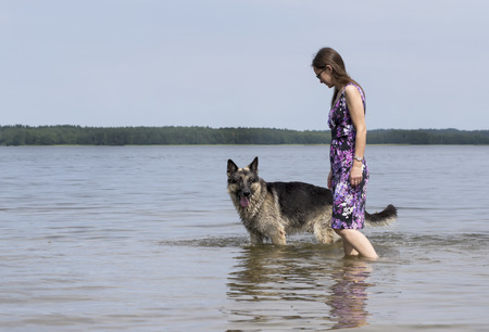 shepherd dog: Mid aged woman walking with her family shepherd dog, standing in the water, blue sky and distant shore in the blurred background