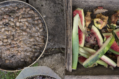 leftovers: Overhead shot of organic leftovers in bowls and containers for farm animals and chicken