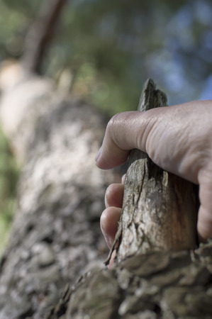 tight focus: Male hands holding a branch and climbing up on a tree, selective focus vertical shot Stock Photo