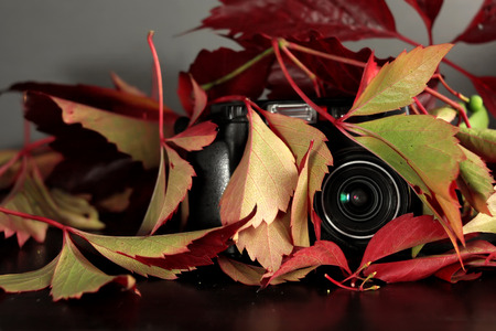Abstract photo camera hidden in red lush foliage, concept of surveillance and control. Studio shot in horizontal format
