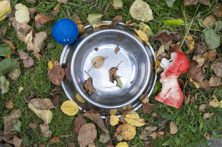 animal shot: Abandoned animal bowl and toys in the autumn garden, overhead shot Stock Photo