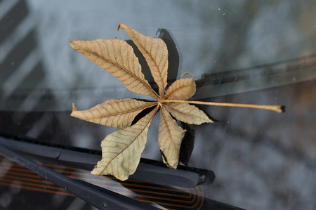 season specific: Autumn leaf on the car windshield, concept of season specific