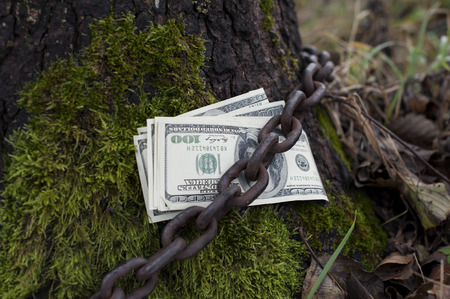 tethered: Bundle of US dollars tethered by metal chain to the tree in the forest. Concept of financial security